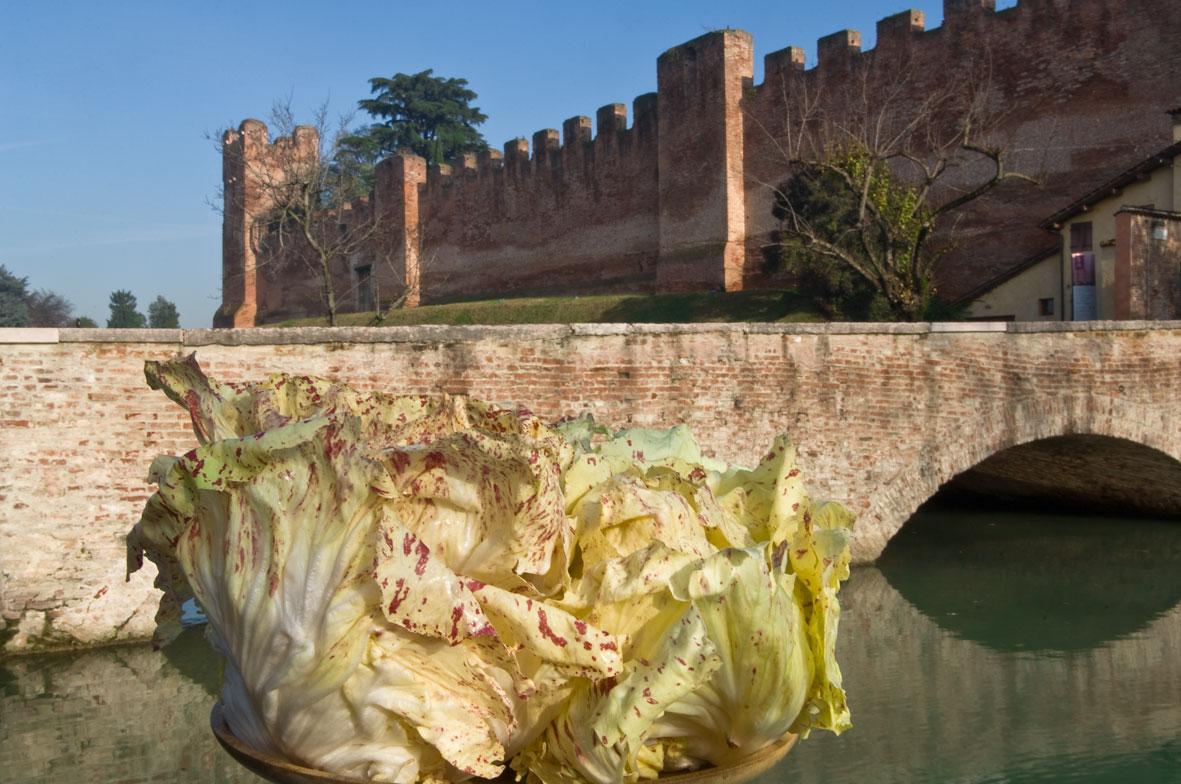 itinerari tra gusti e sapori - il radicchio di Castelfranco